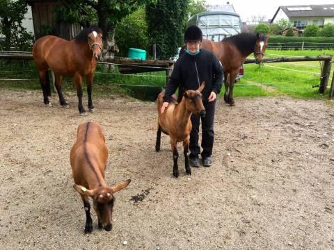 Reiten, Kutschfahrten und Ziegen mit der Lebenshilfe Berchtesgadener Land